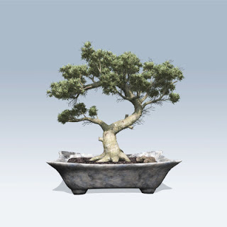 78_Bonsai_01_Full